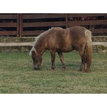 Mine Cavalo De Raça