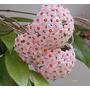Hoya Carnosa - Flor De Nácar - Cañuelas