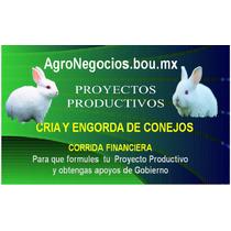 Inicia Negocio Conejos Proyecto Productivo Corrida Financier