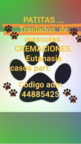a bajo costo.traslados y cremaciones de mascotas.eutanasia