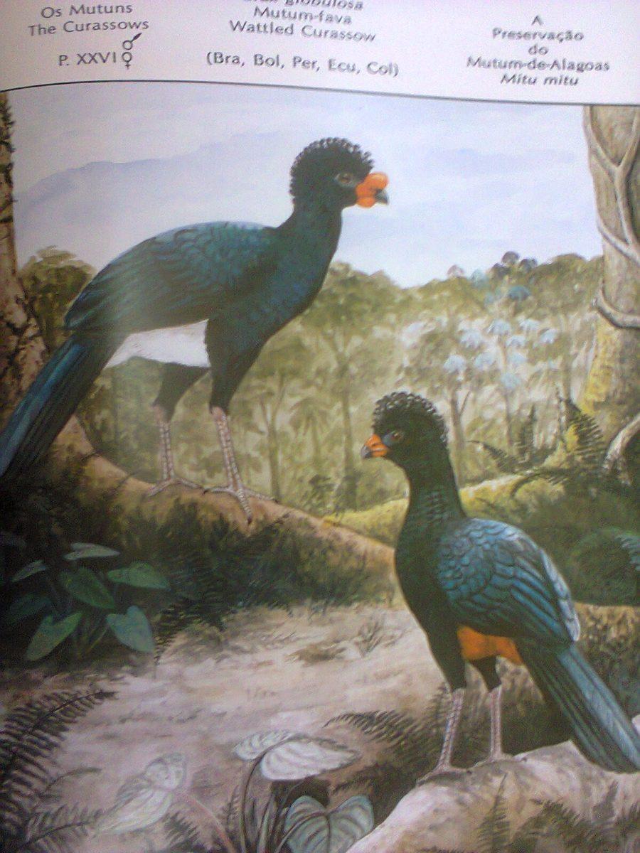 Preservação Do Património Natural: A Preservacao Do Mutum De Alagoas-pedro Mario Nardelli