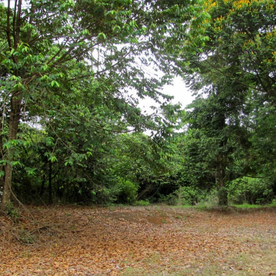 a treasure hidden in the heart of the caribbean forest!