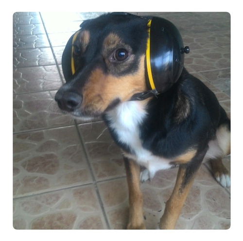 abafador canino