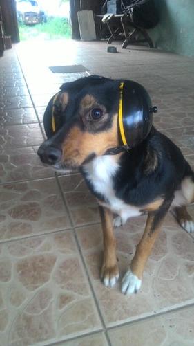 abafador de som canino