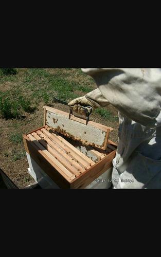 abejas asesoramiento y venta de todo tipo d material apicola