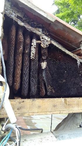 abejas avispas  bajamos  panales y enjambres en el dia
