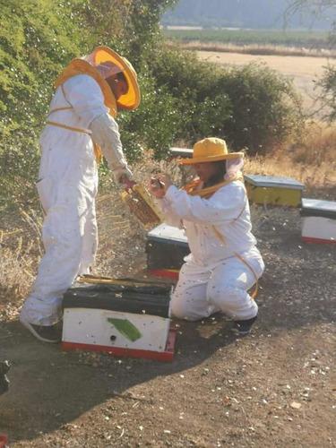 abejas reinas carnicas