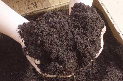 abono orgnico compost de lombrices ideal para cultivos - Abono Organico