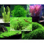 Semillas Plantas De Acuario Mix 17 Variedades