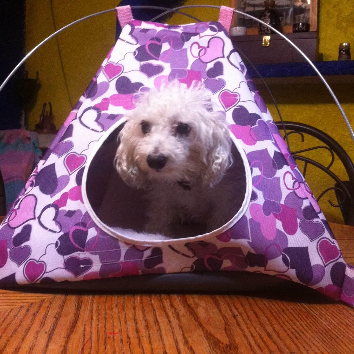 accesorios para perros casas de campa a en