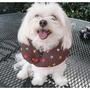 Collar Cachorro Bumper - Mantenga A Su Perro En El Lado Seg
