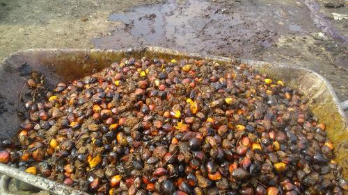 aceite crudo de palma somos fabricantes