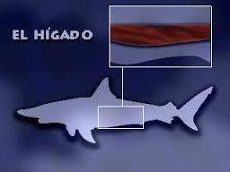 aceite de higado de tiburon