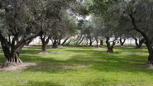 aceite de oliva extra virgen yancanelo bidón 5 litros x 2 u