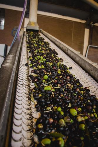 aceite de oliva extra virgen yancanelo botella 500 ml x 6 u