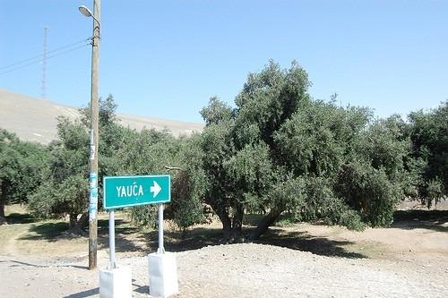 aceite de oliva y aceitunas de calidad