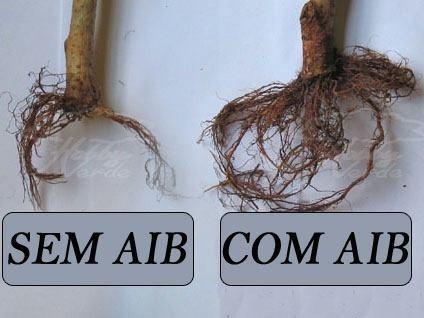ácido indol acetico enraizador hormônio 6000ppm 100g a i a