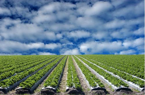 acolchado agricola  1.2  cal 90 plata negro