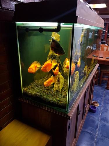 acuario 600 litros
