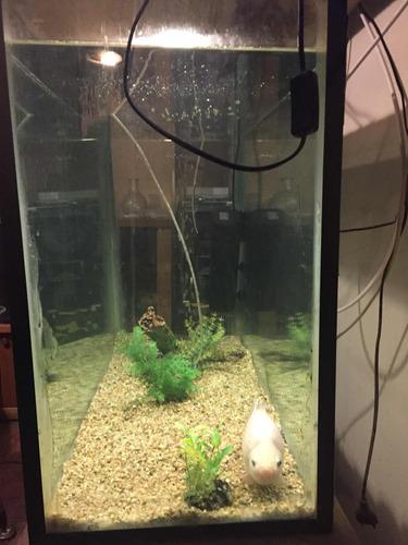 acuario con tapa, luz, filtro de aire y oxigenador, y un pez