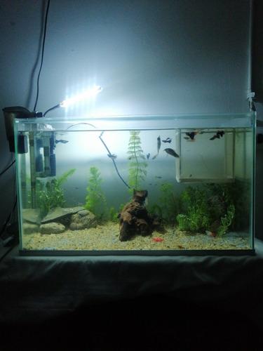 acuario de 65 litros.