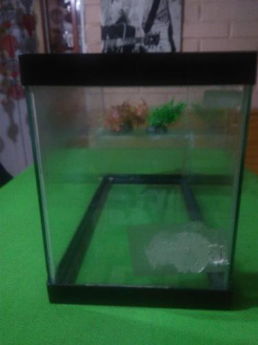 acuario de tortuga