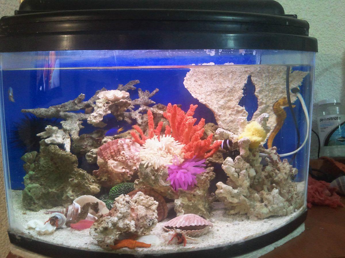 acuario peces marinos pecera panoramica marina paquete
