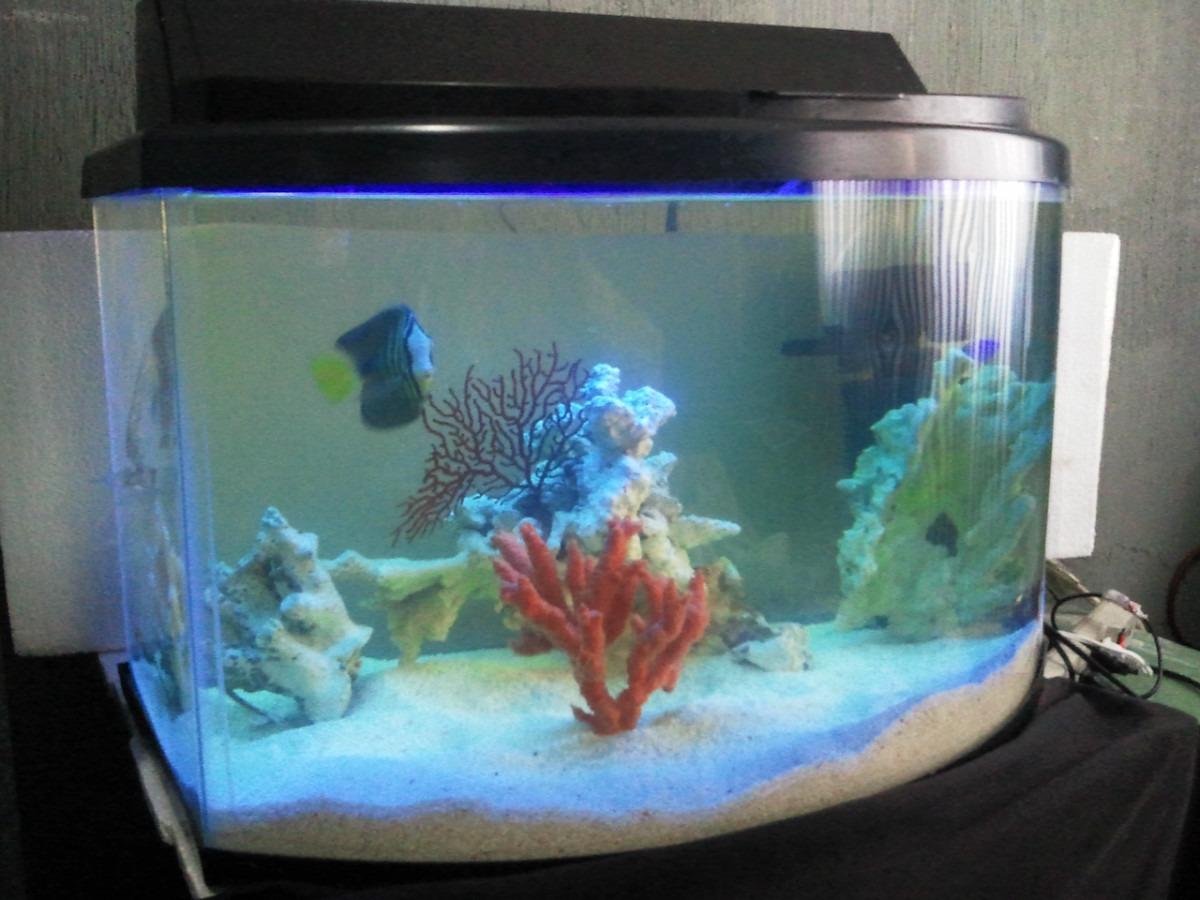 Acuario peces marinos pecera panoramica marina paquete for Peces de pecera