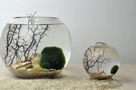 acuario, peces planta