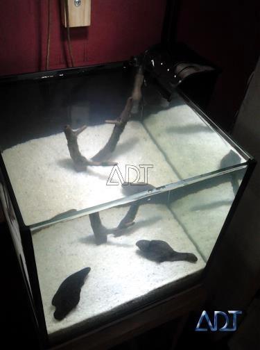 acuario-peces-plantas acuaticas- sustrato inerte (arena si.)