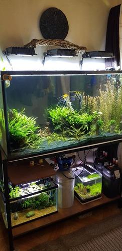 acuario plantado 300 lts tlaxcala