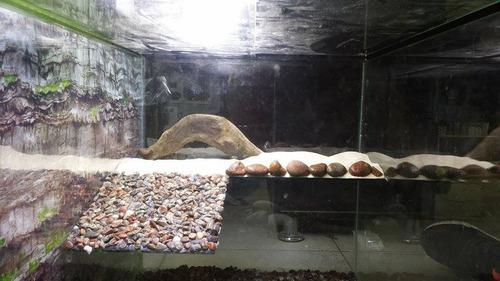 acuaterrario para tortugas + delivery lima metropolitana