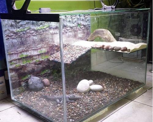 acuaterrario para tortugas y otros reptiles 70l