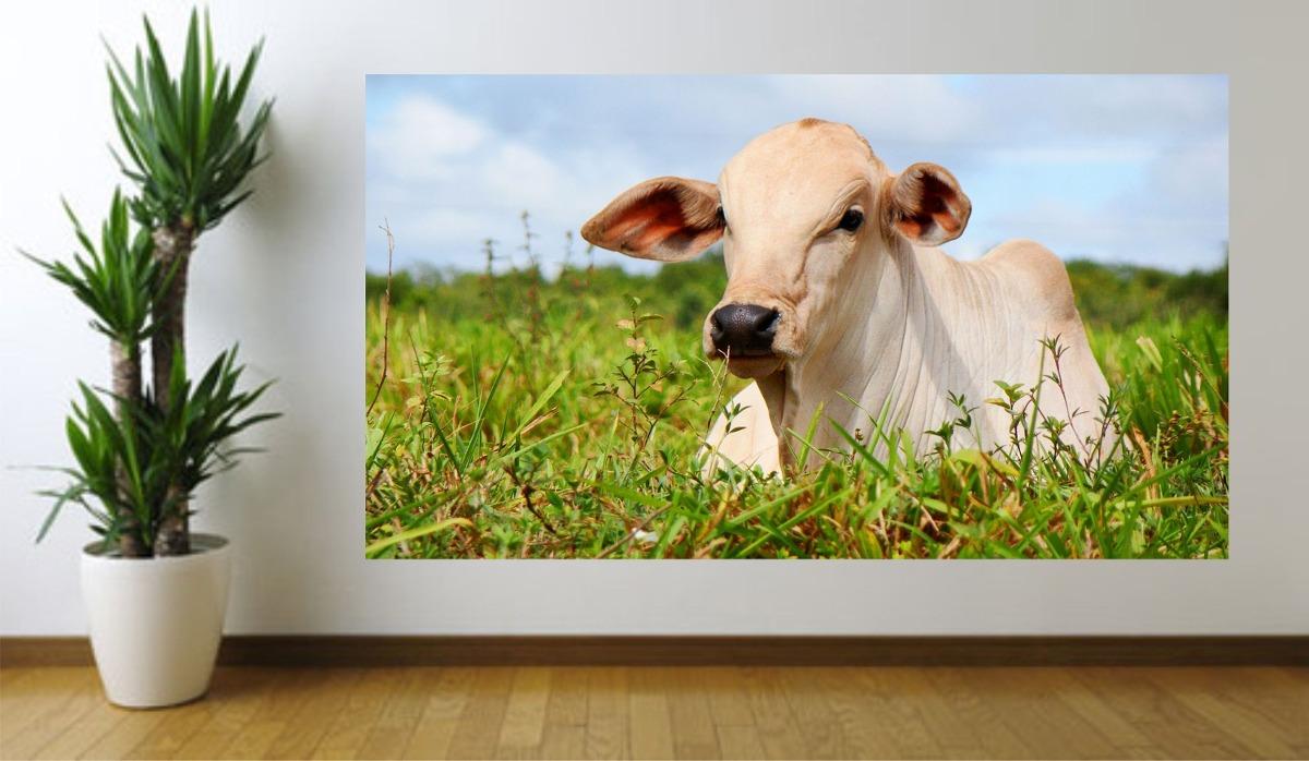 Adesivo De Parede Imagem Foto Animal Boi Nelore Fazenda - R  44 87c2b4810f4