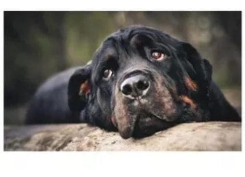 adesivo decorativo cachorro fofo vet pet shop animais