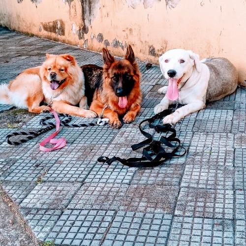 adestramento canino ...cia dogmanship brasil