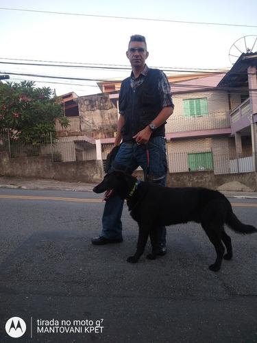 adestramento de cães e de outros animais