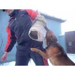 adestramento de cães em 3 dvds para todos os cães cachorro!