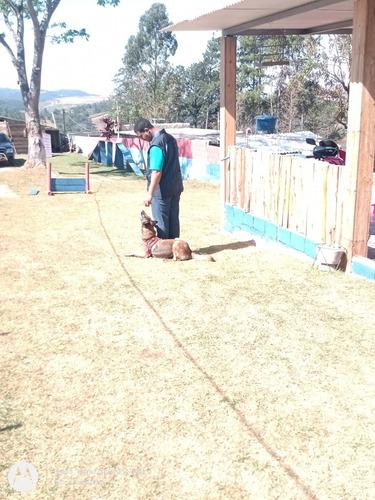 adestramento de cães no internato