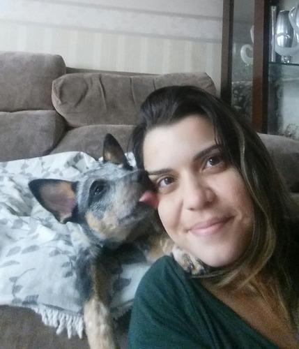 adestramento positivo para cachorro - niterói/ rj