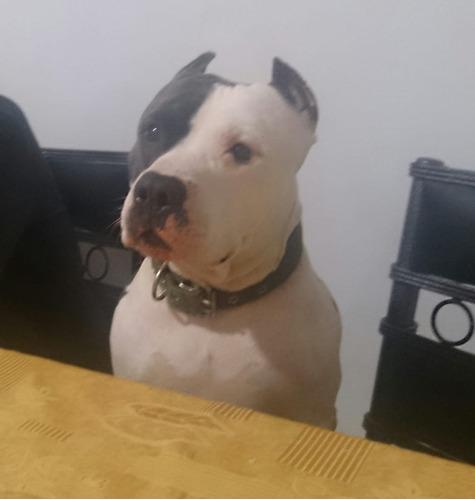 adiestrador canino a domicilio