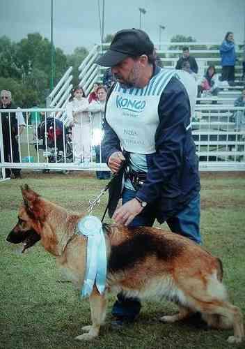 adiestrador canino profesional adiestramiento [ver video]