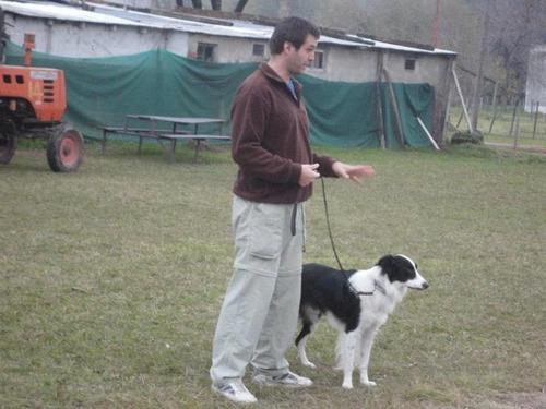 adiestrador canino uba zona norte