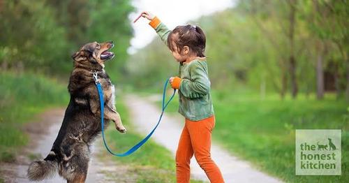 adiestrador conductista canino
