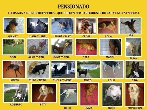 adiestrador y pensionado canino