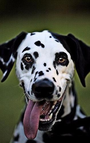 adiestramiento canino a domicilio .