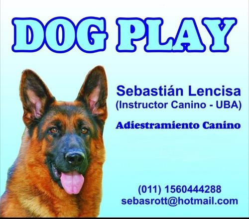 adiestramiento canino a domicilio caba