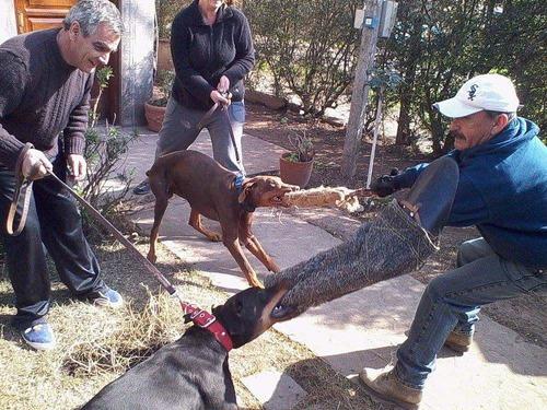 adiestramiento canino a domicilio sin castigo zona sur