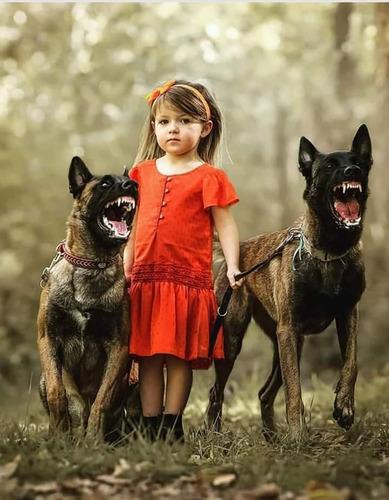 adiestramiento canino avanzado y basico