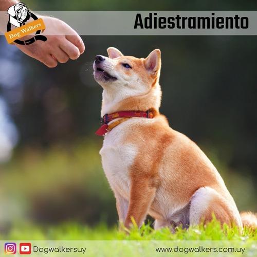adiestramiento canino dog training new school